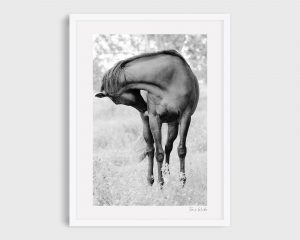 Photograph of Horse 1 - Black Velvet