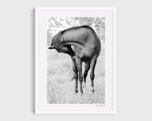 Photograph of Horse 1 - Black Velvet