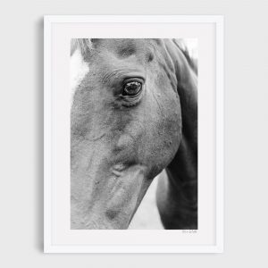 photograph of horse 3 clover