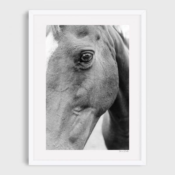 photograph of horse 3 clover