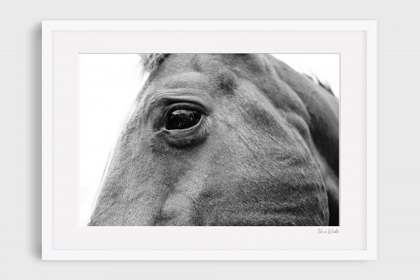 photograph of horse 4 Great Heart