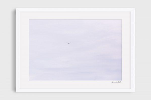 photograph bird in flight - Chasing Blue