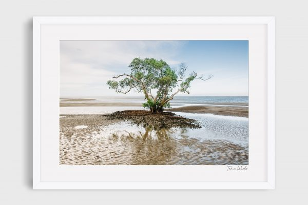 photography nudgee beach 5 - Escape