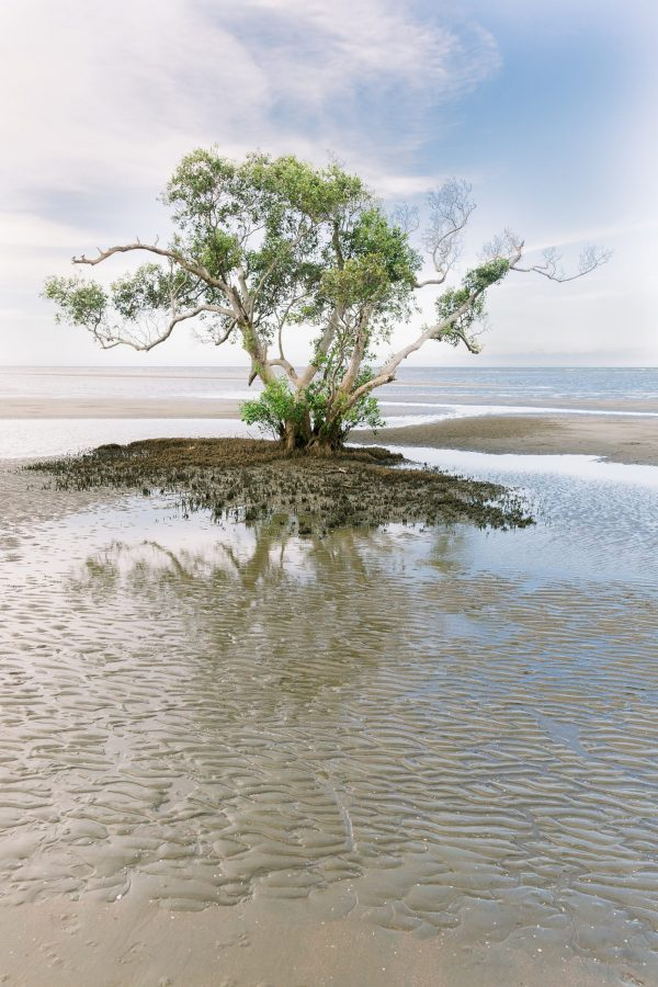 photograph Nudgee Beach 2 - Vita