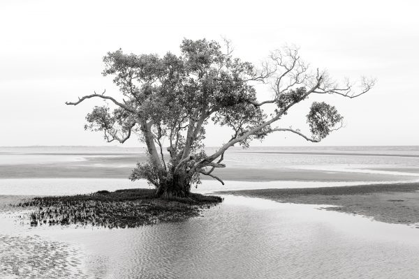 photography nudgee beach 3 - Isolation