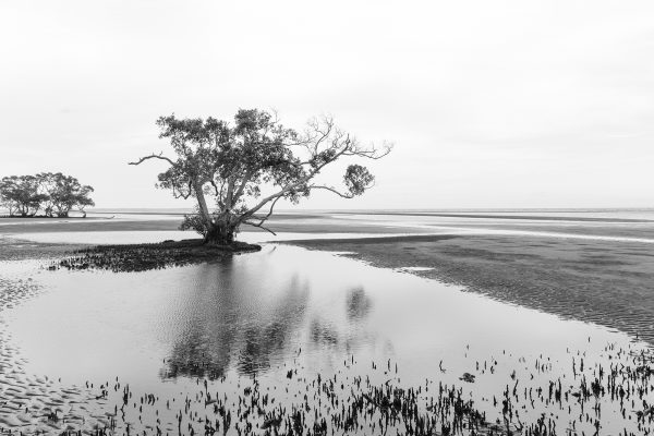 photography nudgee beach 4 - Reflections