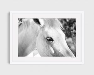 photograph of horse 6 Blanc