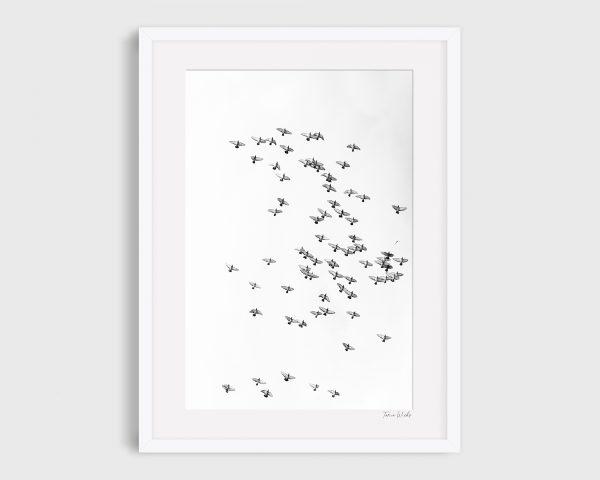 photograph birds in flight Serenity B&W