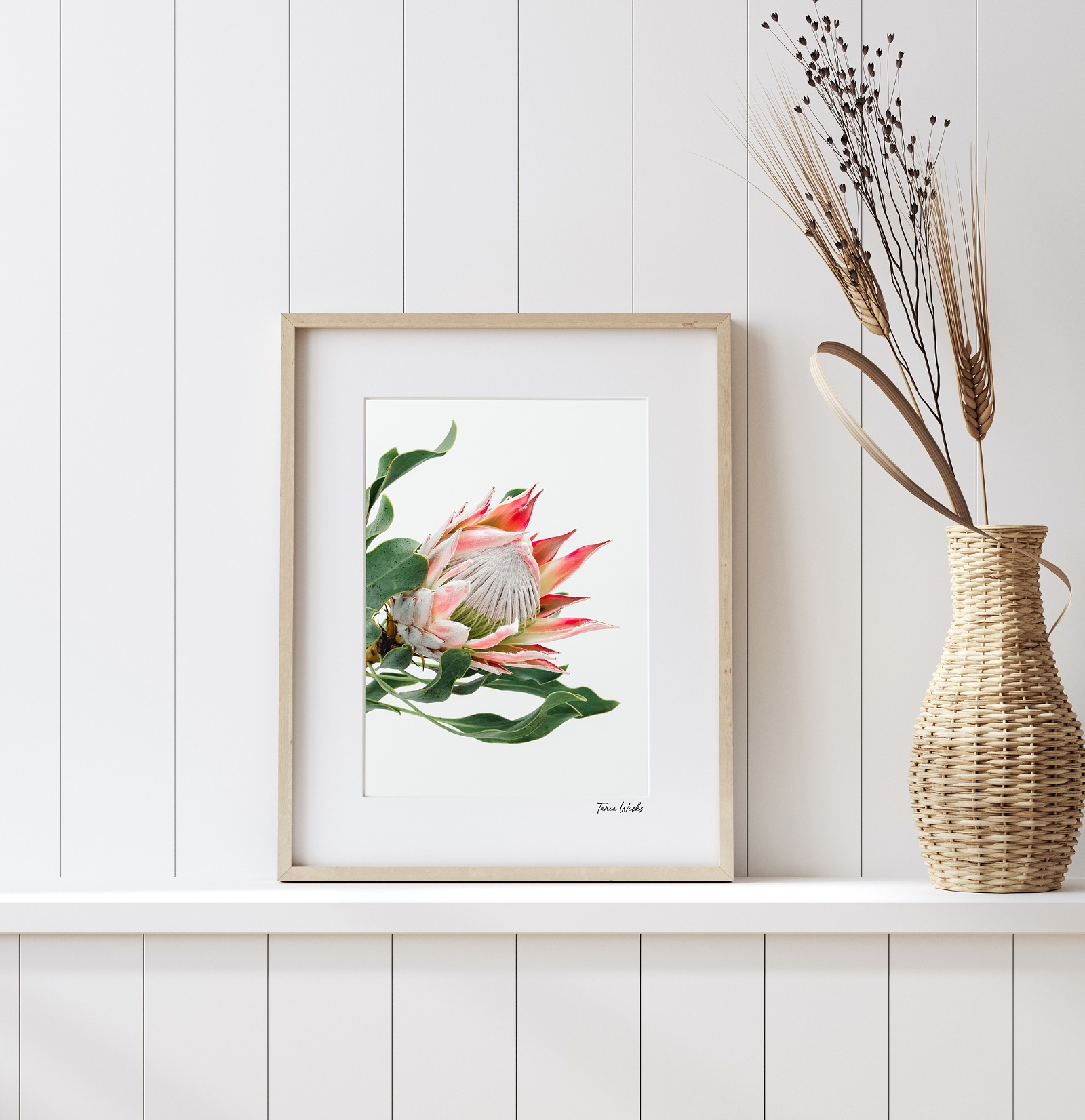 King Protea wall art