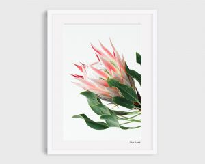 "King Protea print ""Mellie"""