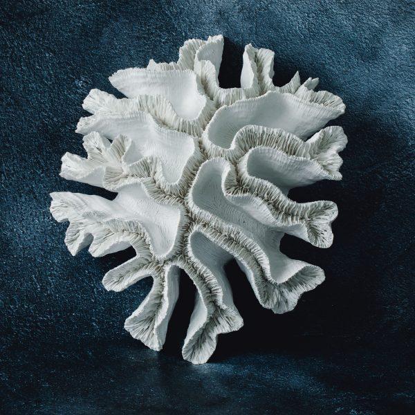 Coral still life photo