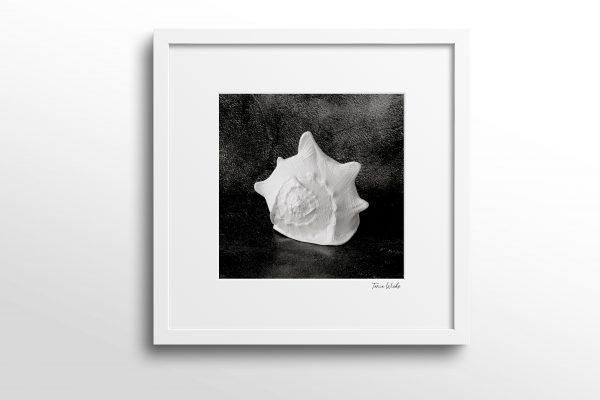 Seashell Still life photo