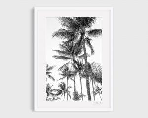 Hamilton Palms Black and White Print